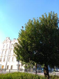 Baum - fotografiert mit dem Gigaset GS185